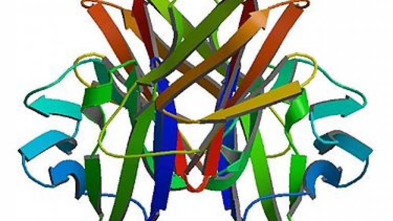 CD4如何幫助治療愛滋病毒和愛滋病患該了解CD4的幾件事